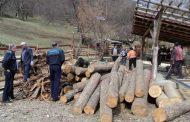 Firme forestiere, călcate de poliţişti