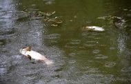 De ce au murit peştii din lacul Ştrand?