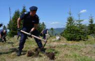 O fundaţie din Braşov împădureşte 106 hectare de teren defrişate ilegal, pe Valea Vâlsanului