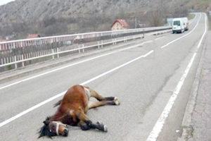 Doi cai pulverizaţi de maşini pe autostradă