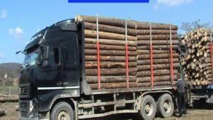 Camion plin cu lemne, gata să se răstoarne