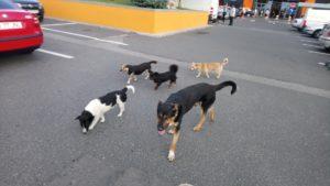 La Auchan Bradu, cu haita de câini după tine...