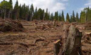 Oamenii au uitat că pădurea i-a apărat de inundaţii şi o taie fără milă!