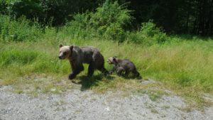La vânătoarea de urşi, a tras baba cu mitraliera