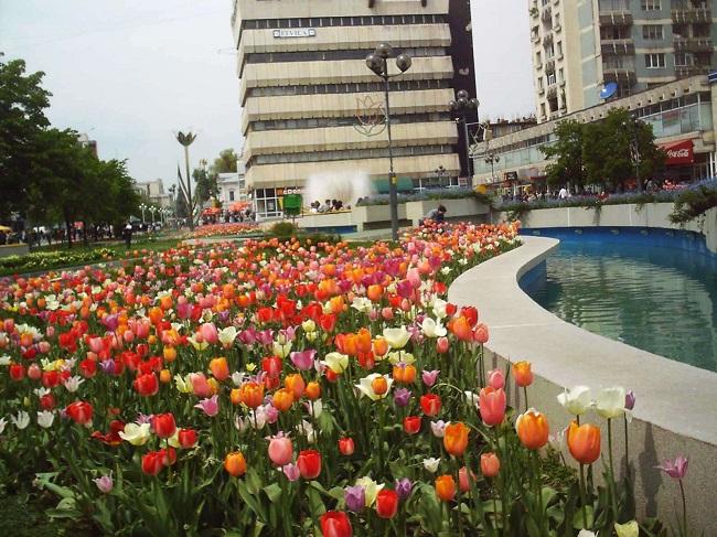 În #Pitești a început plantarea a 120.000 bulbi de #lalea