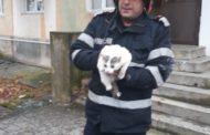 Pompier argeşean A SALVAT PISICA din INCENDIU