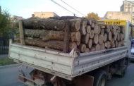 Pagubă de 5.000 de lei pentru un metru cub de lemne!