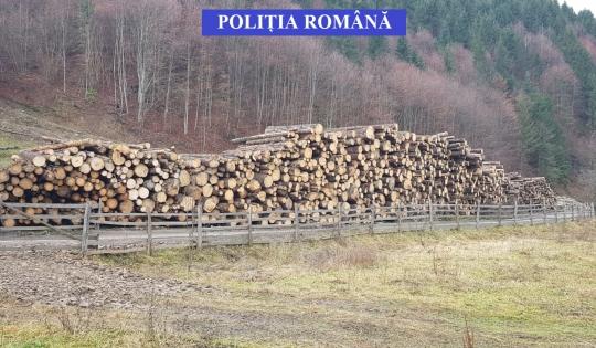 Amenzi consistente şi lemne confiscate