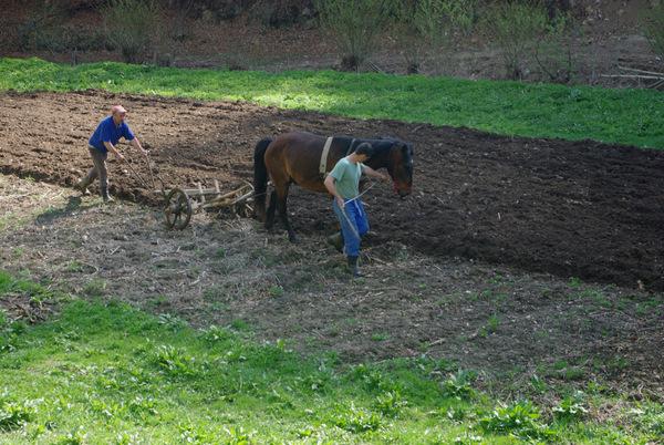 La fermierul sărac nici boii nu trag...