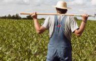 Fermierii vor primi bani ca să angajeze tineri în agricultură