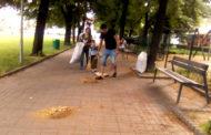 Familie de bulgari, adună teiul din Grădina Publică pentru ŞAMPON