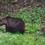 Urs ÎMPUȘCAT la Arefu! A fost evaluat ca TROFEU