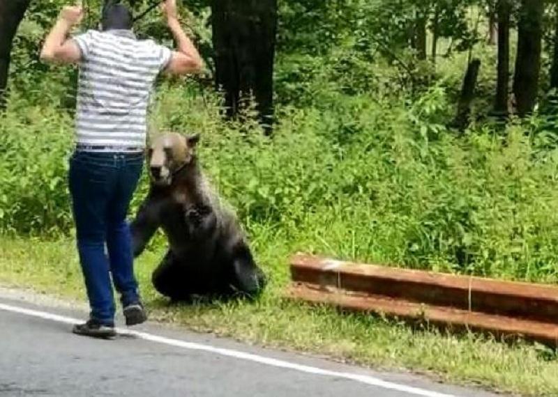 La un pas de a fi sfâşiat de urs