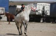 Proprietari de cai din Argeş, amendaţi de inspectorii sanitar veterinari