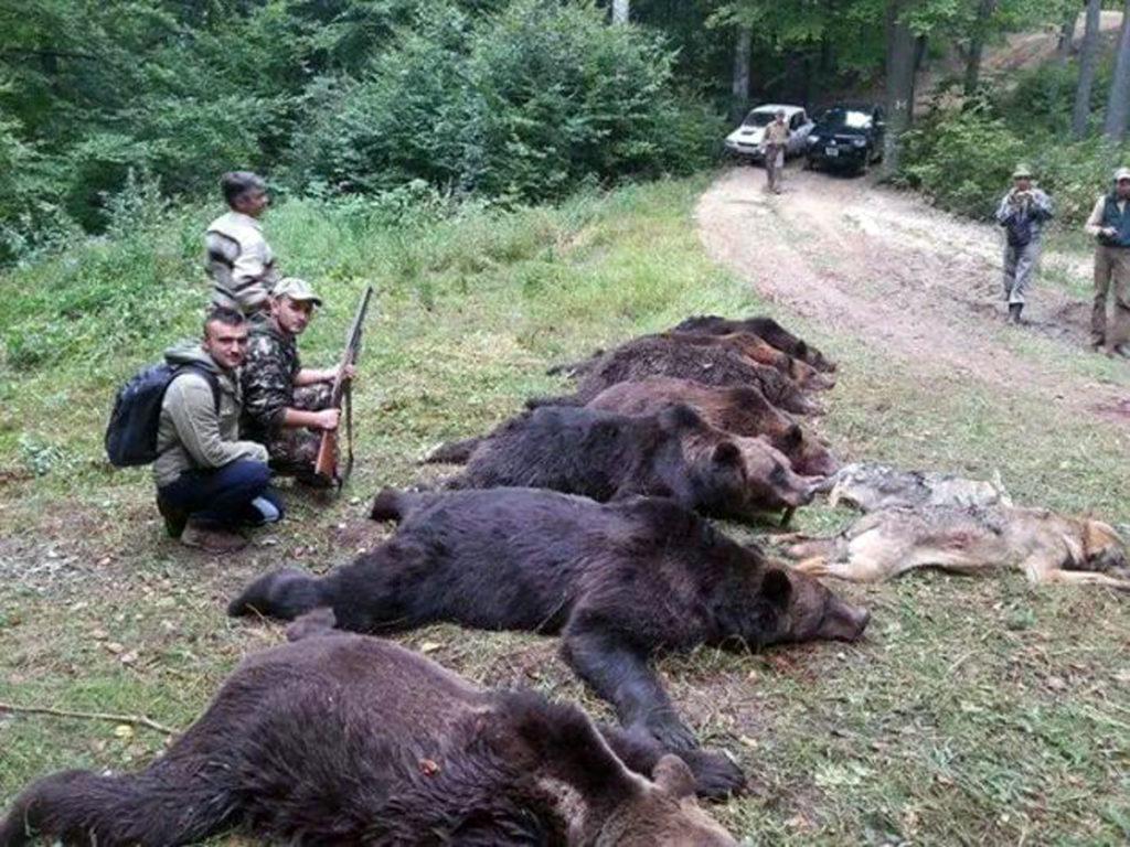 Patru urşi, împuşcaţi în Argeş
