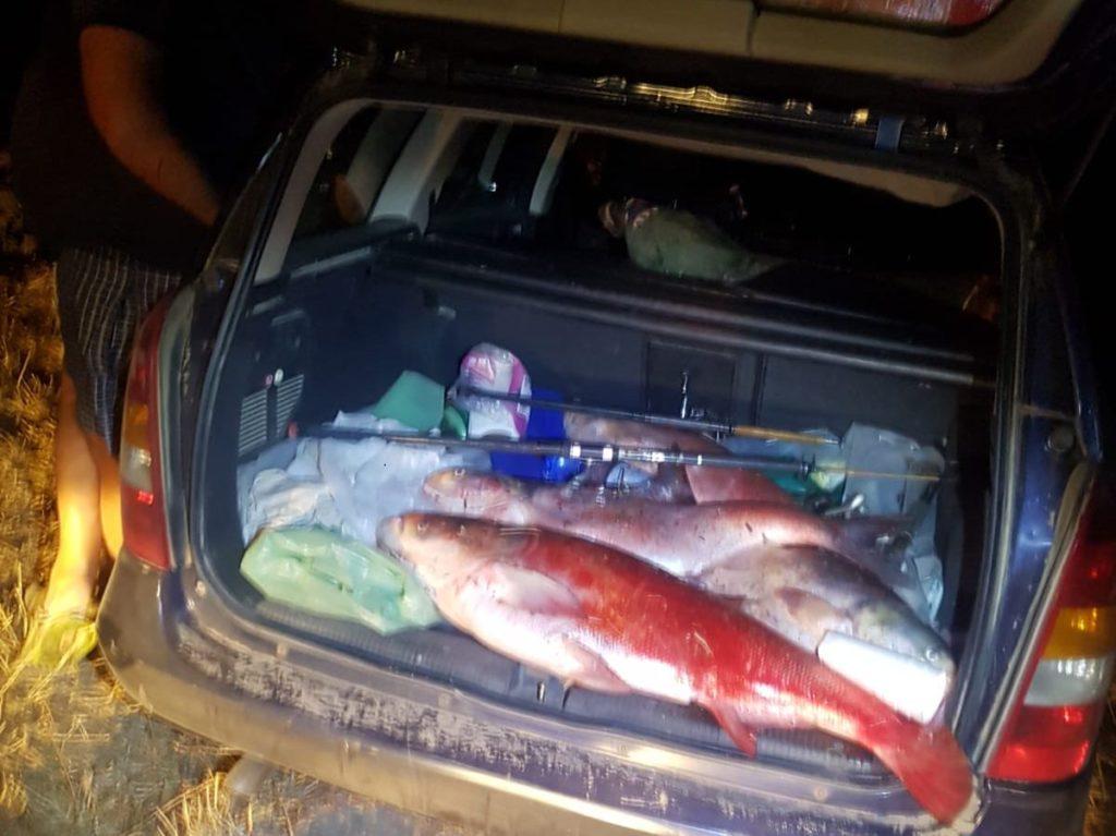 Braconaj piscicol la Izvoru! Portbagaje îndesate cu pești luați cu japca!