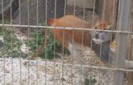 Maimuțoiul Capatos face senzație la Zoo Pitești!