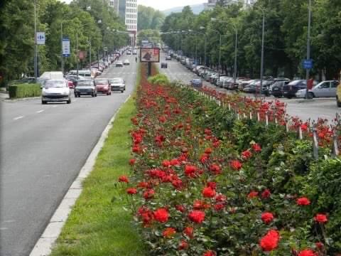Sistem de irigaţii automatizat pentru Calea Bucureşti