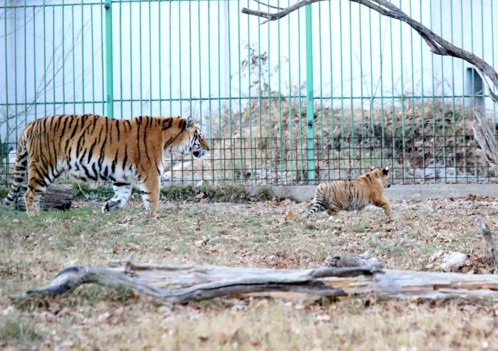 Ziua Porţilor Deschise la Grădina Zoologică Pitești