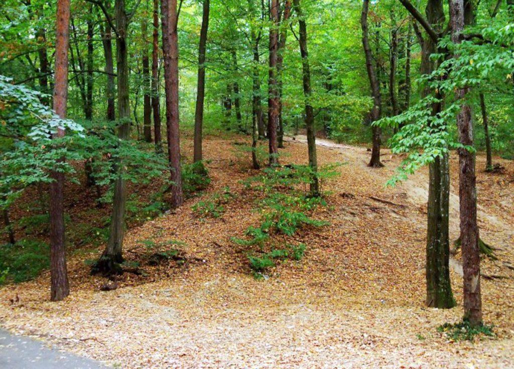 Încă un proiect privind protejarea pădurii Trivale