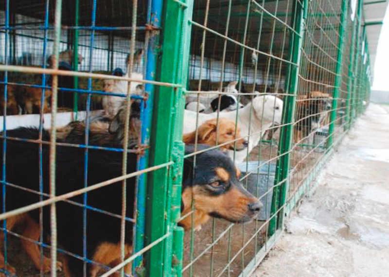 Peste 11.000 de câini, adunaţi de pe străzile Piteştiului!