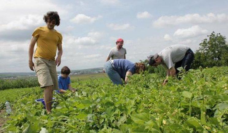 Selecţie în domeniul agricol