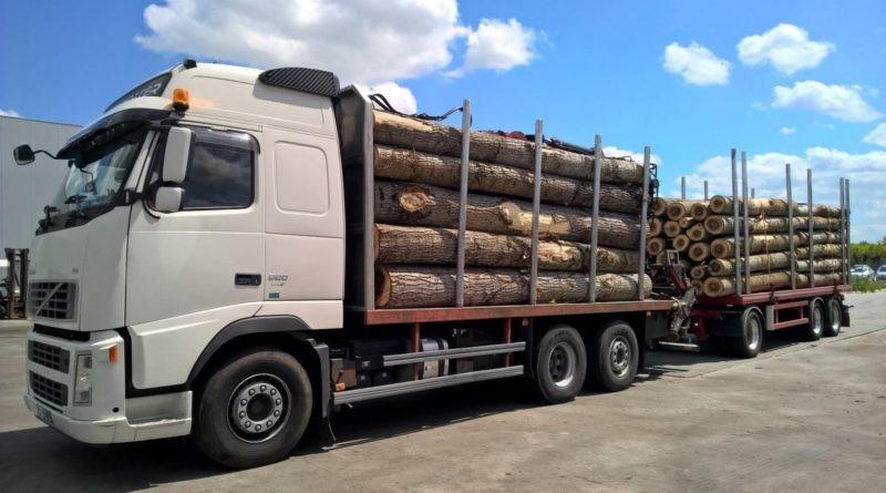 Aproape 100 mc de lemn confiscaţi