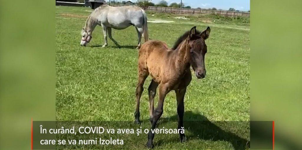 Covid paște la Golești