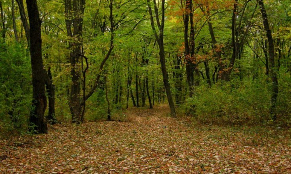 Păduri seculare în Argeș