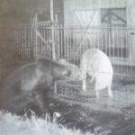 Liber la împușcat doi urși periculoși din Argeș