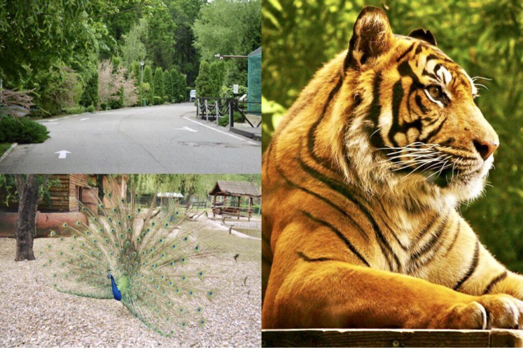 De Paști, Zoo Pitești este deschisă spre vizitare!