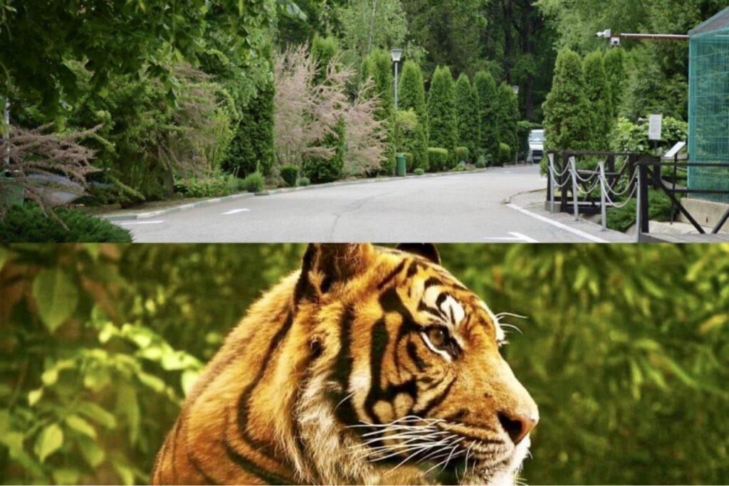 De 1 Iunie, la Grădina Zoo din Pitești intrarea este gratuită!