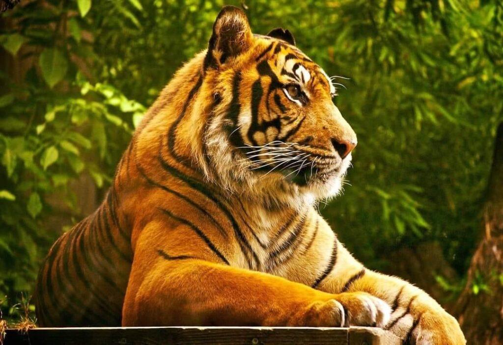 Zoo Trivale va fi deschisă în a doua zi de Rusalii