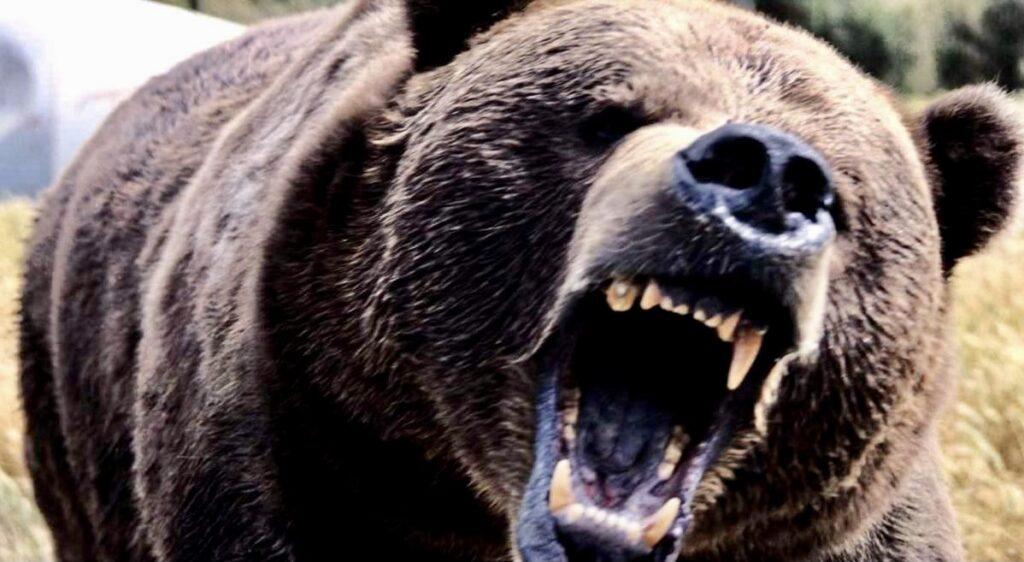 Un urs a făcut prăpăd la Bughea de Sus. Oamenii sunt îngroziți!