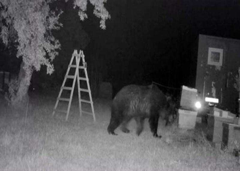 Urșii au atacat din nou în gospodării din Argeș