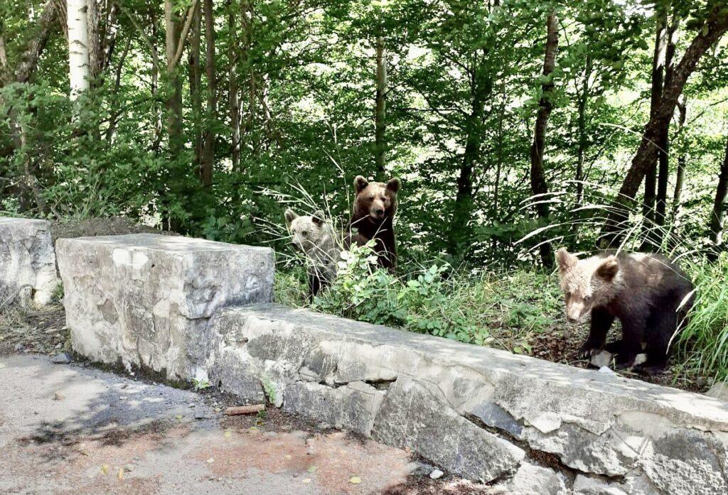 O femeie din Pitești și-a luat amendă după ce a făcut poze cu urșii