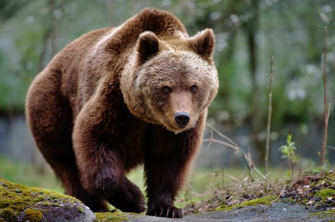 Urşii şi... baronii