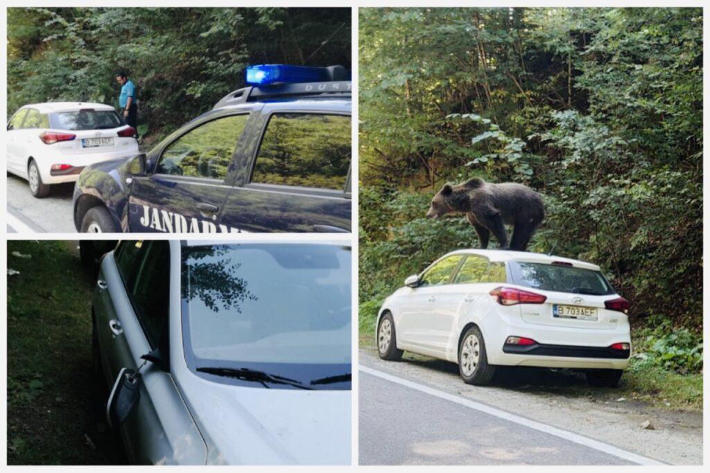 Ursul a escaladat o mașină parcată pe Transfăgărășan