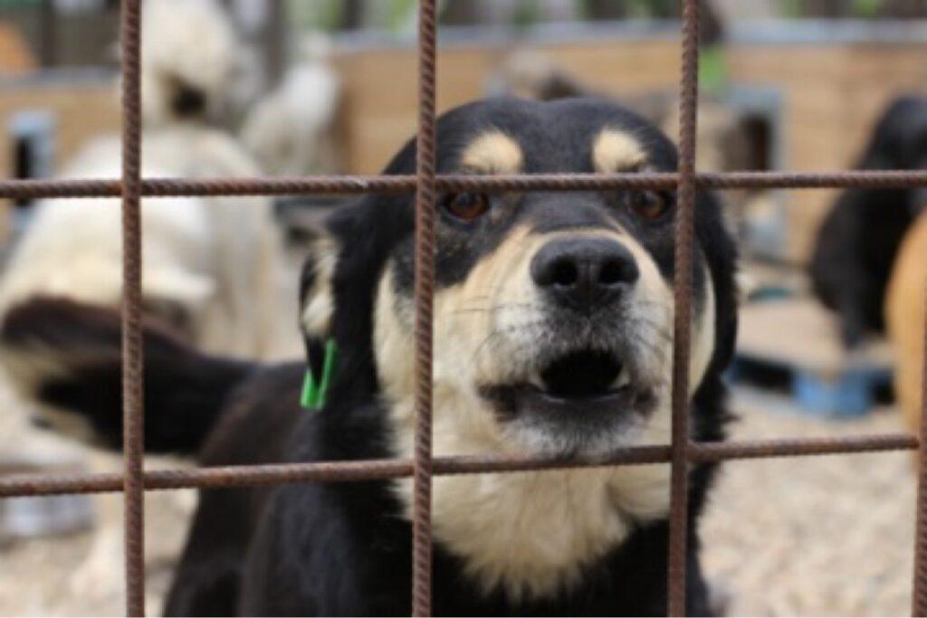Adăpostul de câini de la Smeura, la capacitate maximă!