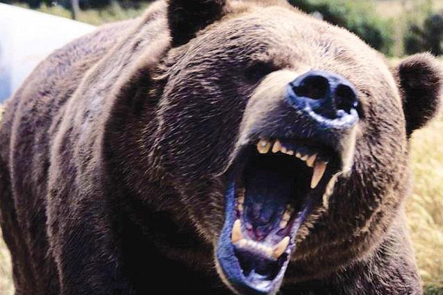 Încă un urs agresiv a fost împuşcat în județul Argeș