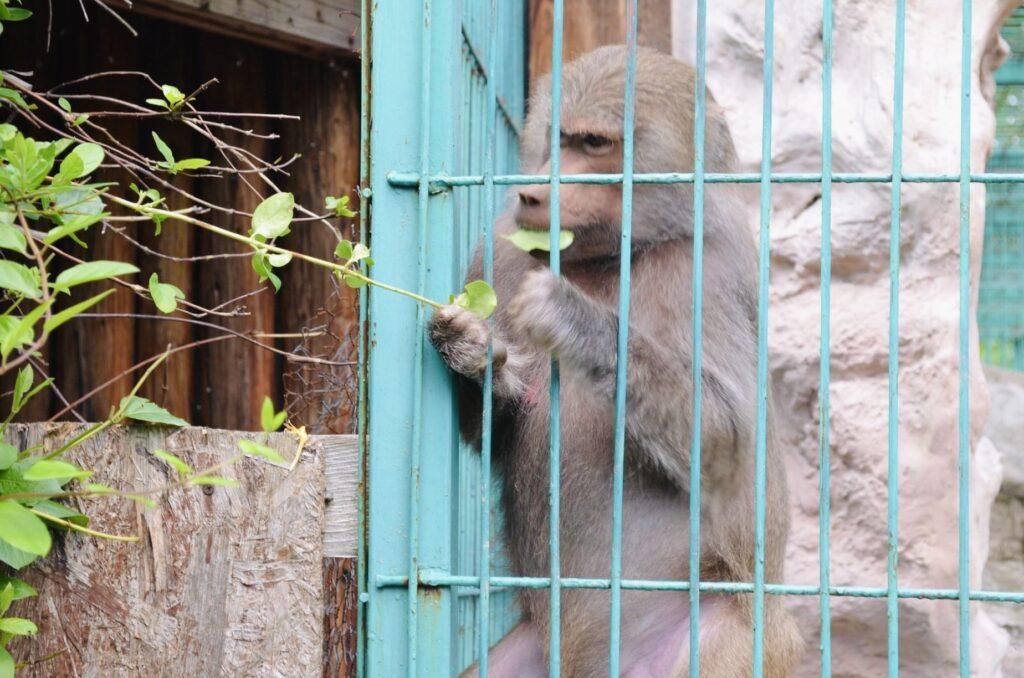 Intrare gratuită pentru toți vizitatorii la Zoo Pitești